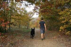 Koiran kanssa retkeily